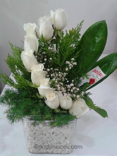 Küre beyaz Güller