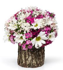 kütükte kır çiçeği