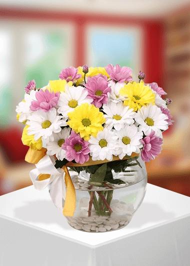 fanusta- kır çiçeği
